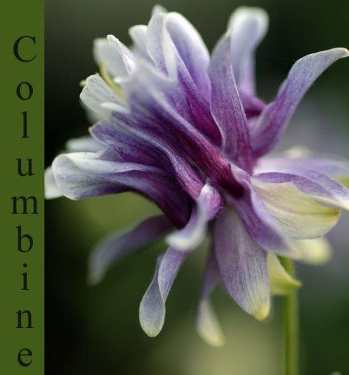columbine_2_1.jpg