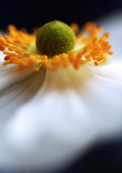 anemone-for-web.jpg