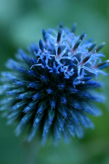 blue-31.jpg