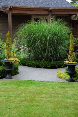 small-miscanthus.jpg