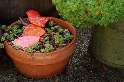 leaves_on_sedum.jpg