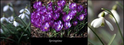 springtime_09_1