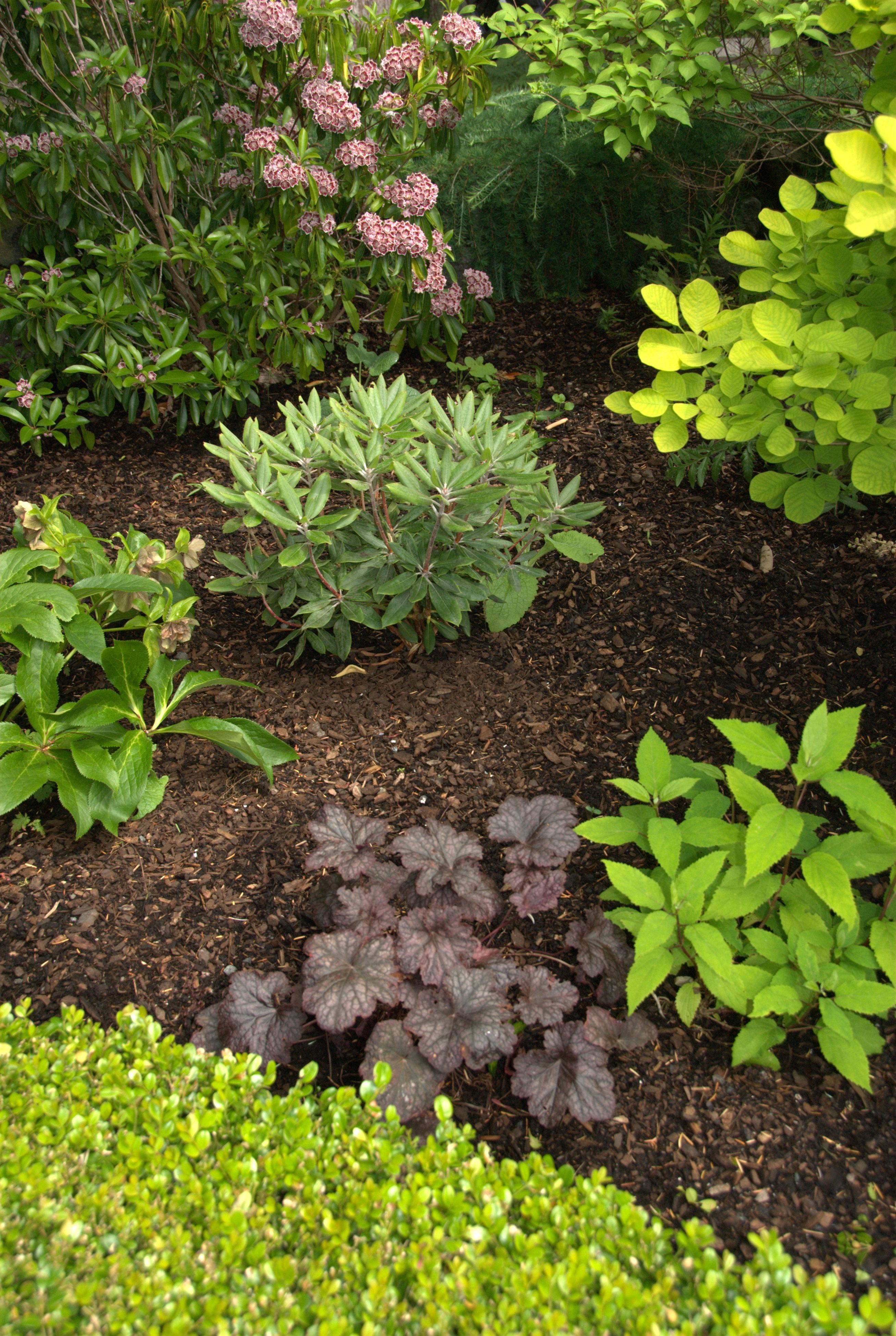 Bark Mulch In A Garden