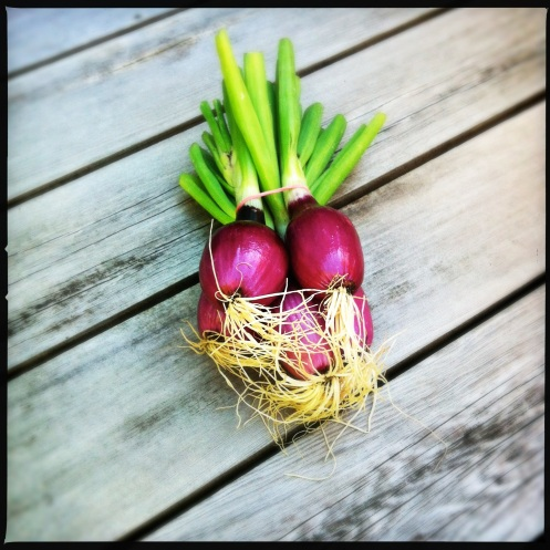red onion love