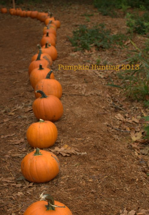 pumpkin hunting